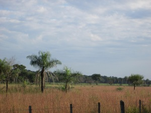Paraguayan field